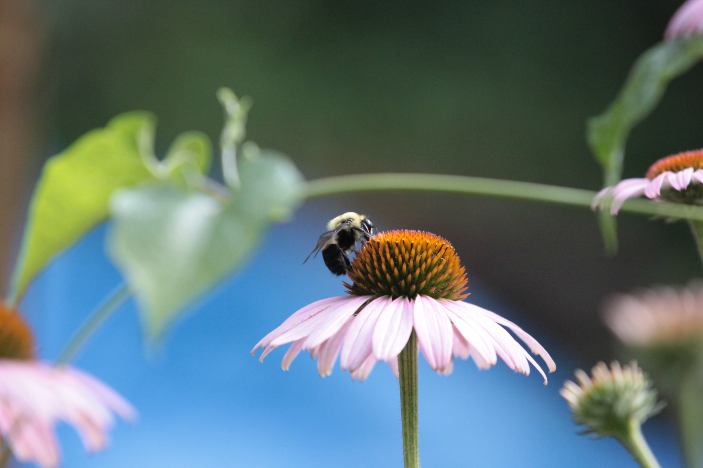 Album Nice Profile Bee On Flower Small